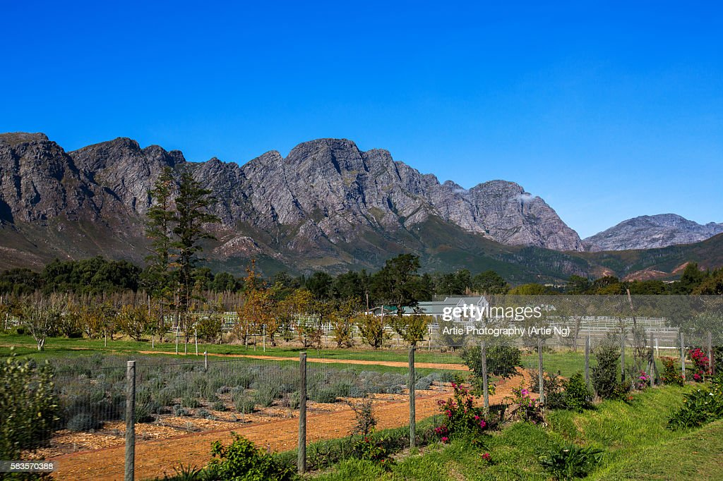 View of Mountains, Farm and Vineyard in Franschoek, Western Cape, South Africa : Stock Photo