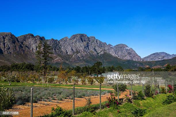 View of Mountains, Farm and Vineyard in Franschoek, Western Cape, South Africa
