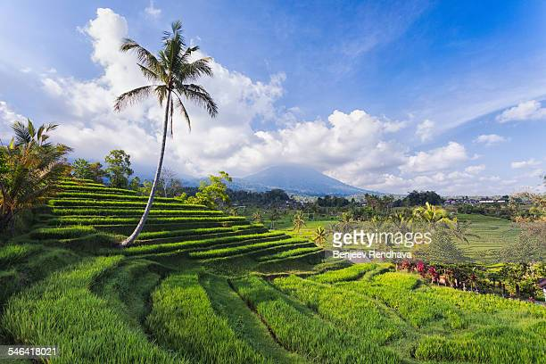 view of mt adeng from jatiluwih rice fields, bali - rice terrace stockfoto's en -beelden