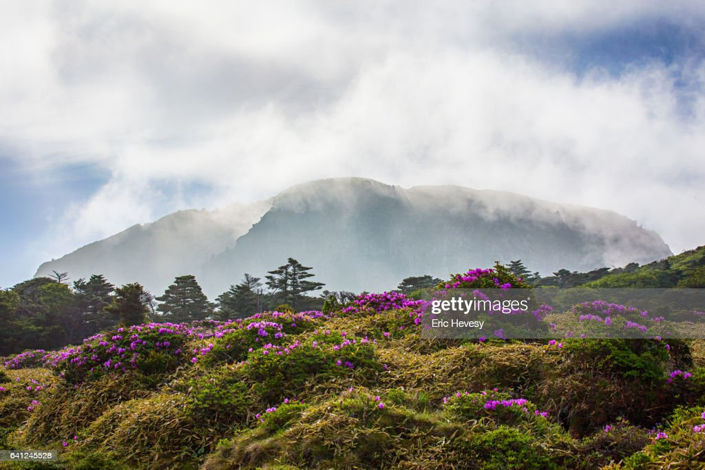 View of Mt. Hallasan in Spring : Stock Photo