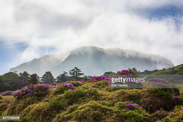 view of mt. hallasan in spring - jeju stock photos and pictures