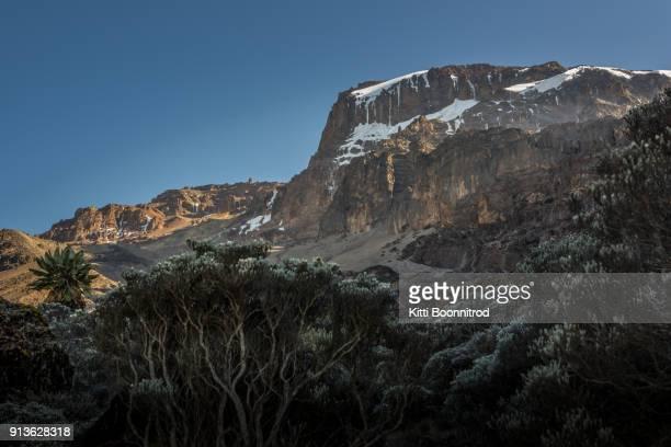 view of mt.kilimanjaro on the way to uhuru peak on machame route, tanzania - mt kilimanjaro stockfoto's en -beelden