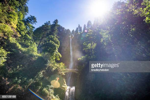 View of Multnomah Falls surrounded by forest in Oregon