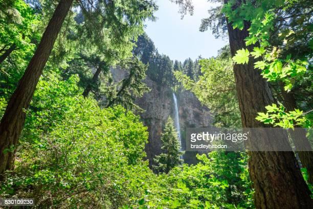 Vue des chutes de Multnomah entouré par la forêt de l'Oregon