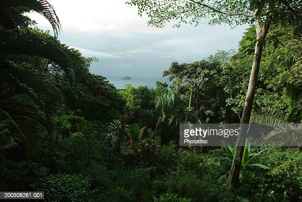 View of ocean through tropical vegetation, elevated view