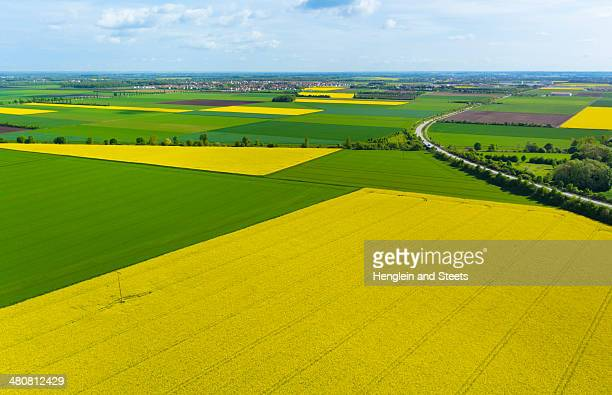 View of oil seed rape fields, Munich, Bavaria, Germany