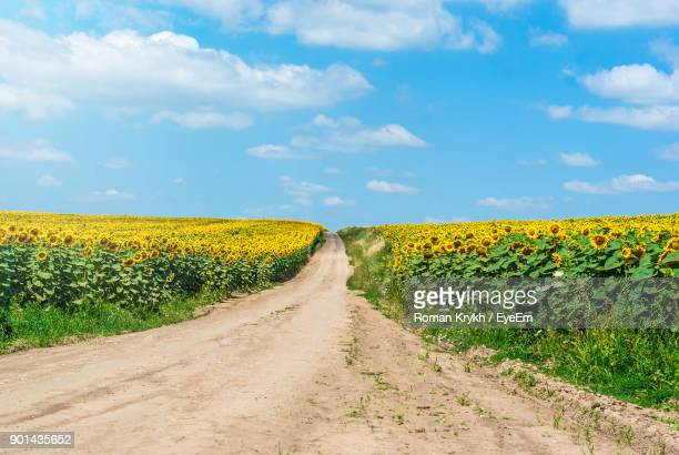 view of oilseed rape field against sky - oilseed rape stock pictures, royalty-free photos & images