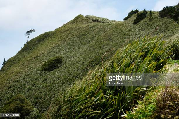 A view of one of many flaxcovered hillsides on October 25 2017 near Sandy Bay Saint Helena Following the introduction of weekly flights to the island...