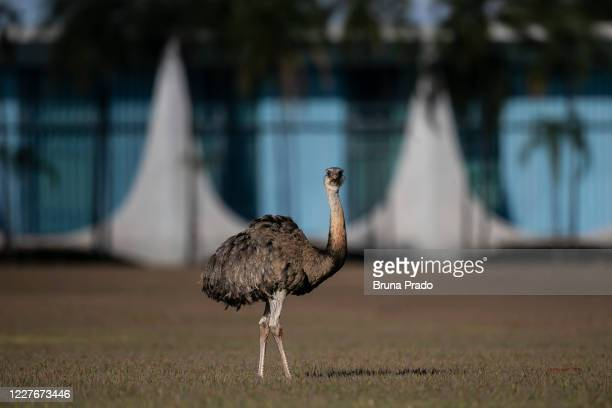 View of one of the emus of the official residence in Alvorada Palace on July 17, 2020 in Brasilia, Brazil. President Bolsonaro announced Tuesday July...