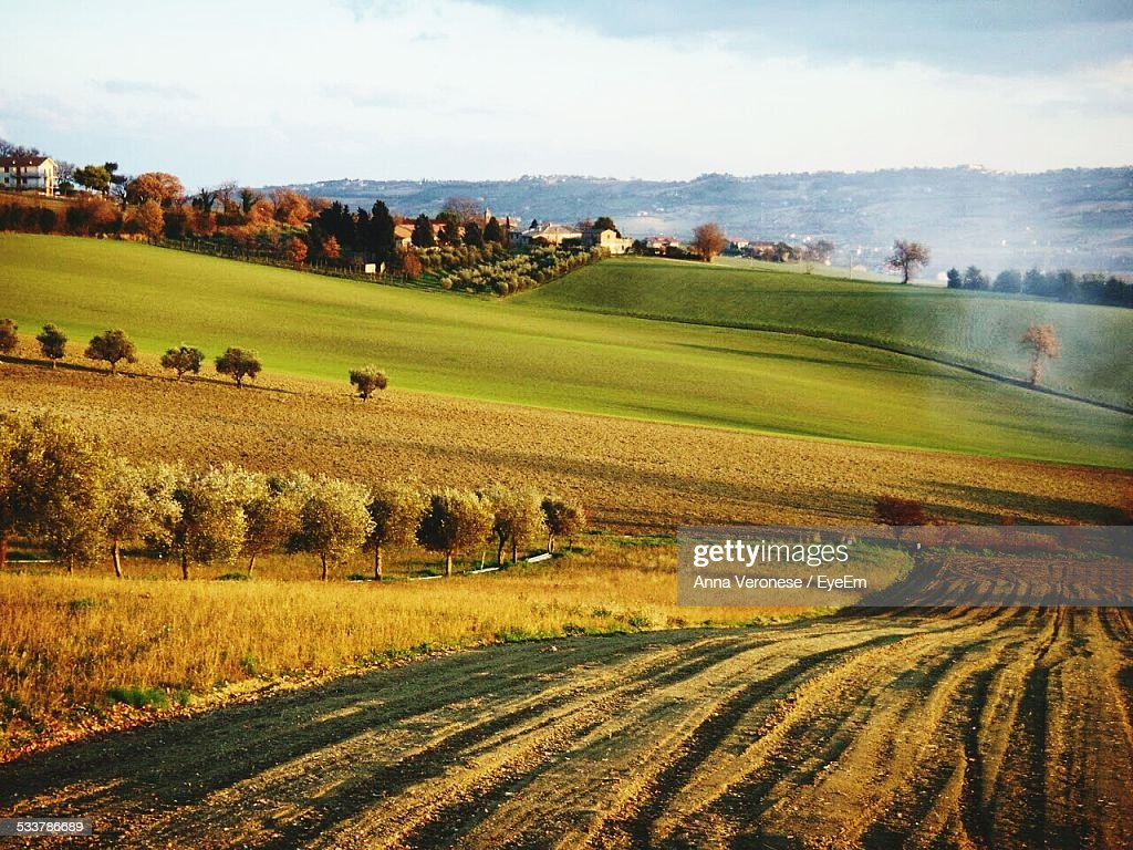 View Of Orchard On Hill : Foto stock