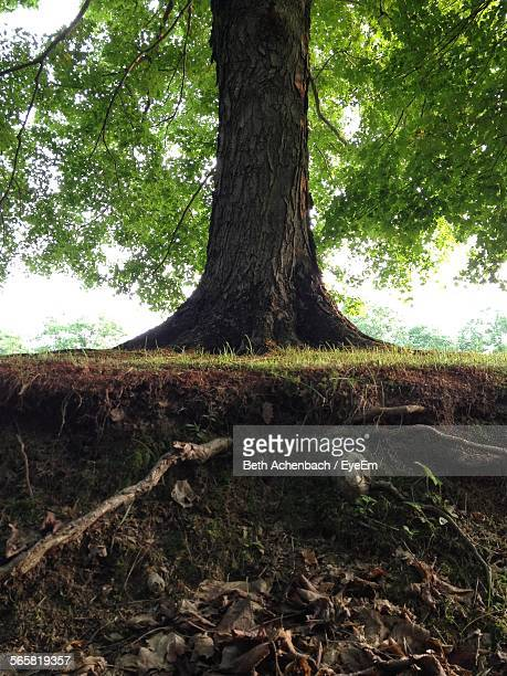 view of overgrown roots of tree - root stock pictures, royalty-free photos & images