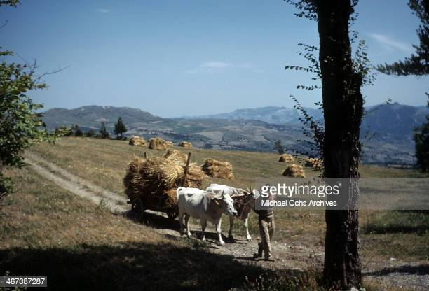 A view of oxen pulling a wagon of hay on the way to Bologna from FlorenceItaly