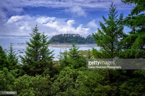 view of ozette island, the westernmost point of land in the continental united states, from the hiking trail to cape alava, olympic national park, washington state - olympic park stock pictures, royalty-free photos & images