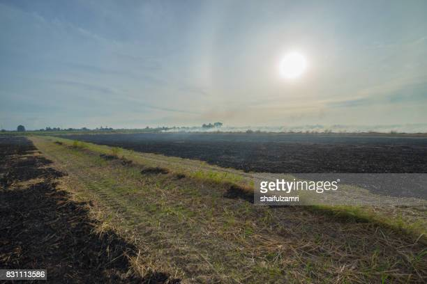 view of paddy fields after harvest season. traditionally, farmers will burn the fields before they start a new season. - shaifulzamri stock pictures, royalty-free photos & images