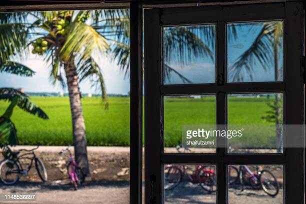 View of paddy fields from traditional house