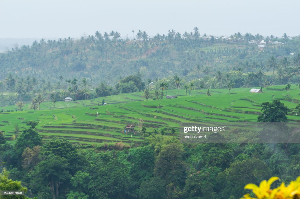 View of paddy fields near Rinjani National Park in Lombok, Indonesia : Stock Photo