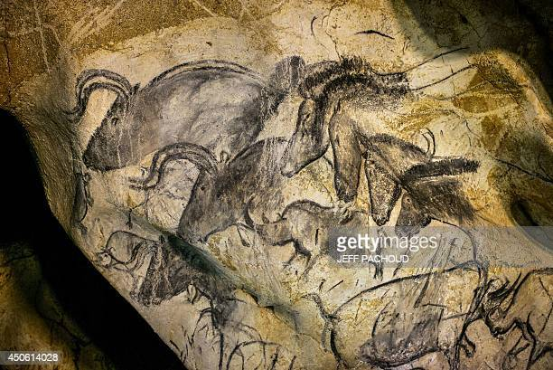 A view of paintings on the rock walls of the Chauvet cave on June 13 2014 in Vallon Pont d'Arc southeastern France France is submitting a request to...