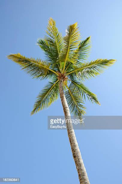 View of palm tree and clear blue sky
