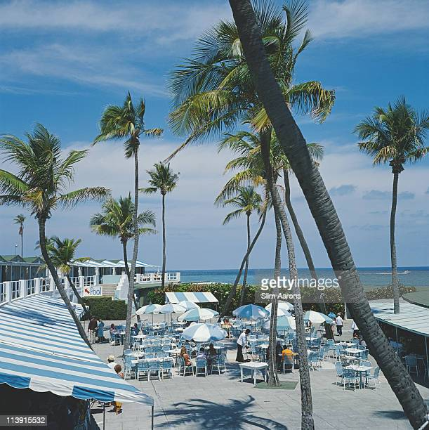 A view of palm trees at a beach resort in Boca Raton Florida April 1978