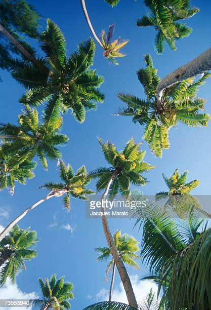 a view of palm trees directly above - jacques fesch stock-fotos und bilder