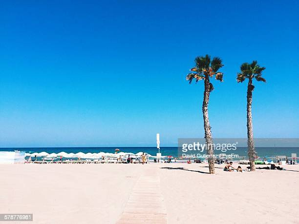 View Of Palm Trees On Beach