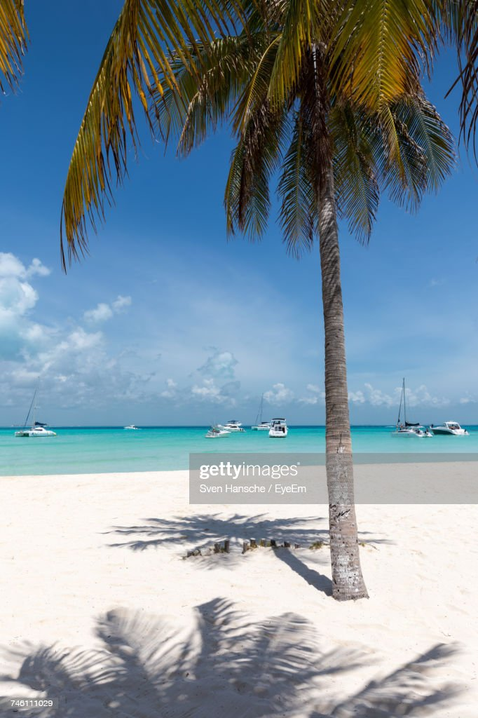 View Of Palm Trees On Beach : Stock Photo