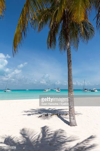 view of palm trees on beach - isla mujeres ストックフォトと画像