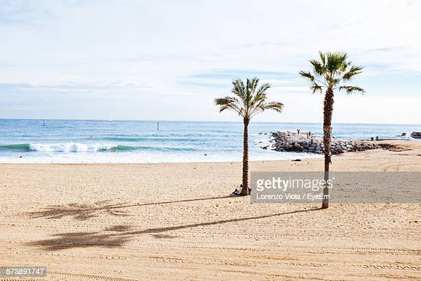 view of palm trees on calm beach - palm branch stock pictures, royalty-free photos & images