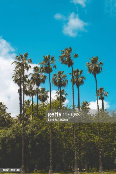 view of palm trees under blue sky - algeria stock pictures, royalty-free photos & images