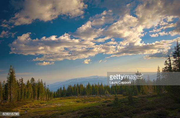 view of panther meadows on mount shasta at sunset; california united states of america - mt shasta stock pictures, royalty-free photos & images