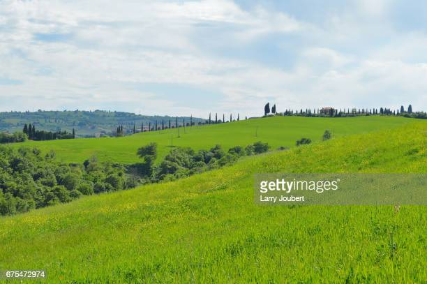 view of pastures and thin cypress tree line in the middle plus houses - san quirico d'orcia stock pictures, royalty-free photos & images