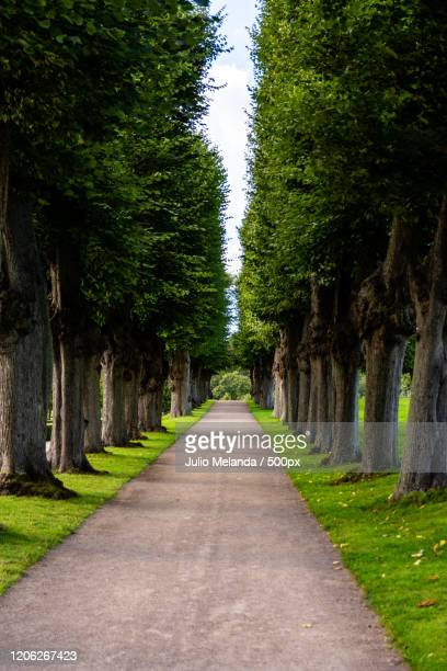 view of path in park, hillerod, denmark - hillerod stock pictures, royalty-free photos & images