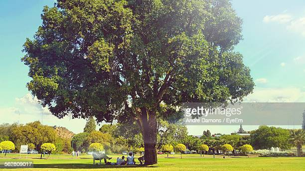 View Of People Relaxing Under Tree In Park