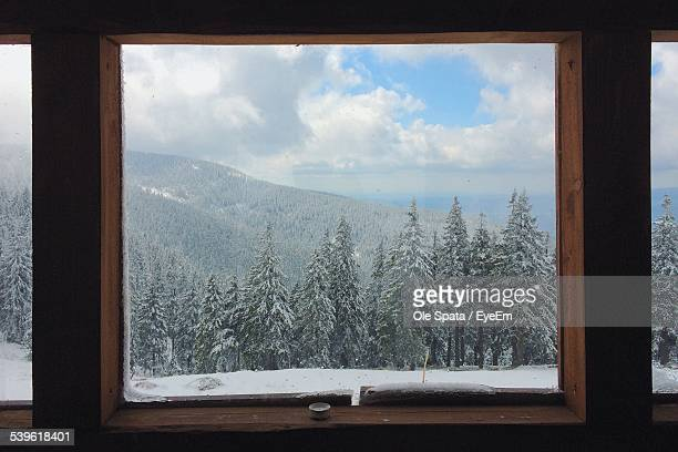 View Of Pine Trees And Mountain During Winter Through Window