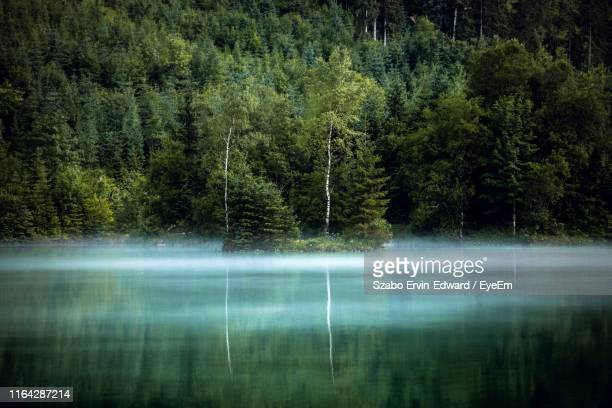 view of pine trees in lake - ruhige szene stock-fotos und bilder