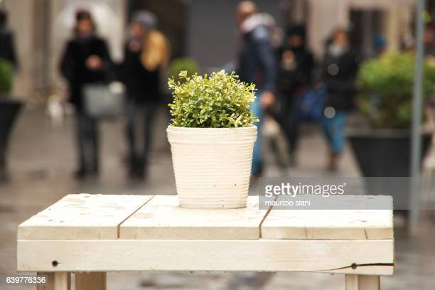 View of plant and table on a street