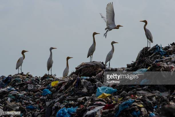 A view of plastic waster in a garbage dump site in Lhokseumawe Aceh province Indonesia on Wednesday June 12 2019 Based on a study released by...