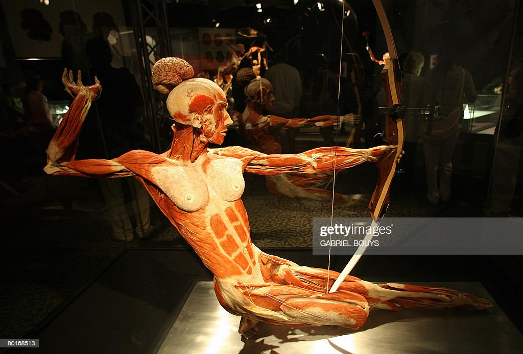 View of plastinated archer at the \'Body Pictures | Getty Images