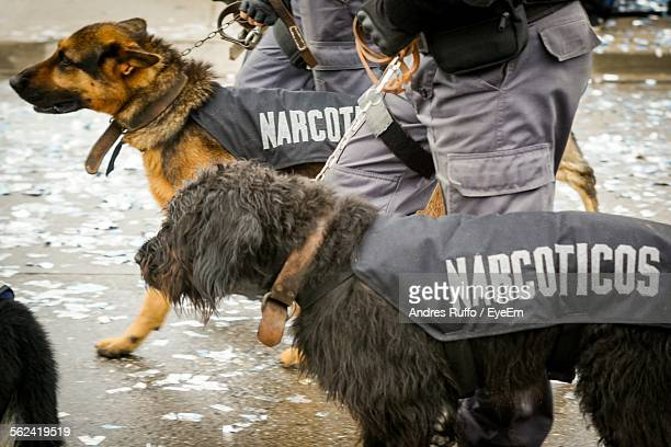 view of police dogs - police dog stock photos and pictures