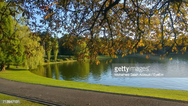 view of pond with trees in background - salah stock photos and pictures