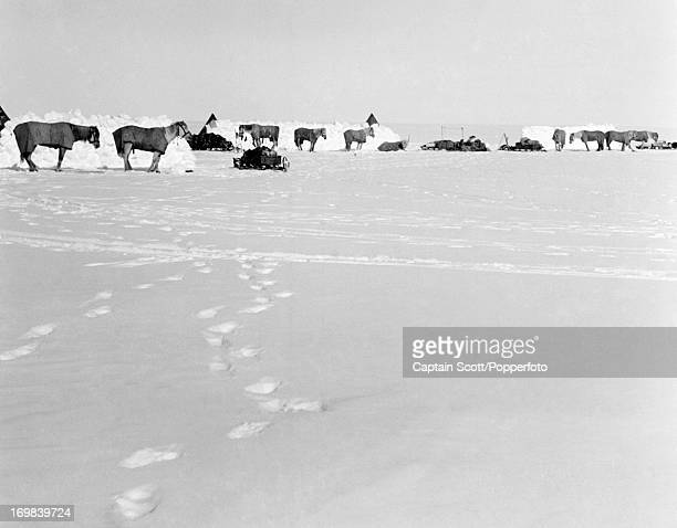 A view of Pony Camp 15 on the Great Ice Barrier photographed during the last tragic voyage to Antarctica by Captain Robert Falcon Scott 19th November...