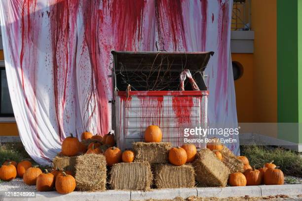 view of pumpkins in container - beatrice stock pictures, royalty-free photos & images