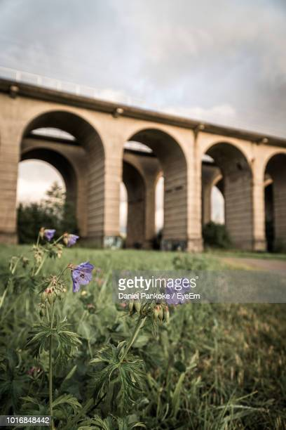view of purple flowering plants against cloudy sky - bielefeld stock pictures, royalty-free photos & images