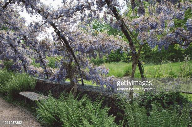 view of purple flowering plants in park - bortes stock pictures, royalty-free photos & images