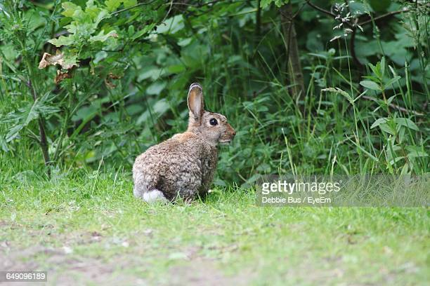 View Of Rabbit In Field