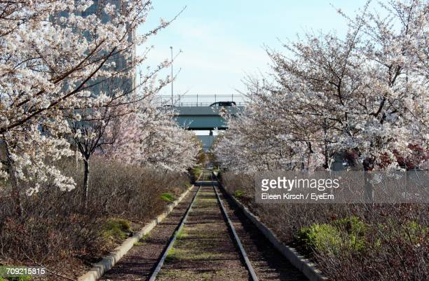 view of railroad tracks - eileen kirsch stock pictures, royalty-free photos & images