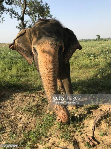A view of rescued Elephants at Wildlife SOS Elephant Care Conservation Center in Mathura