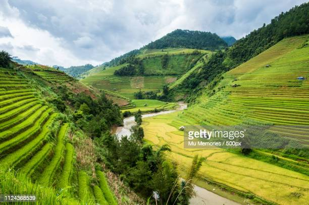 view of rice field terraced - mù cang chải stock pictures, royalty-free photos & images