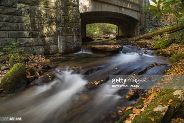 view of river and bridge on forest, brevard, south carolina, usa - nature stock pictures, royalty-free photos & images