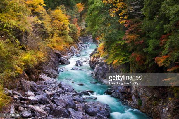 view of river in forest, hatonosu canyon, tokyo, japan - 峡谷 ストックフォトと画像
